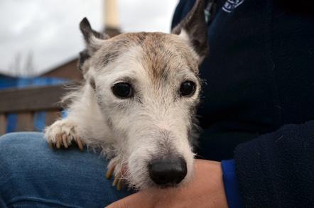 Battersea Dogs Home Brands Hatch Kent