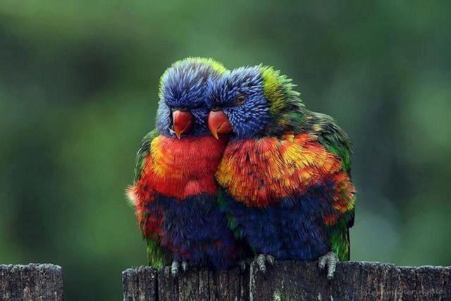 colorful love birds beautiful photographs pinterest