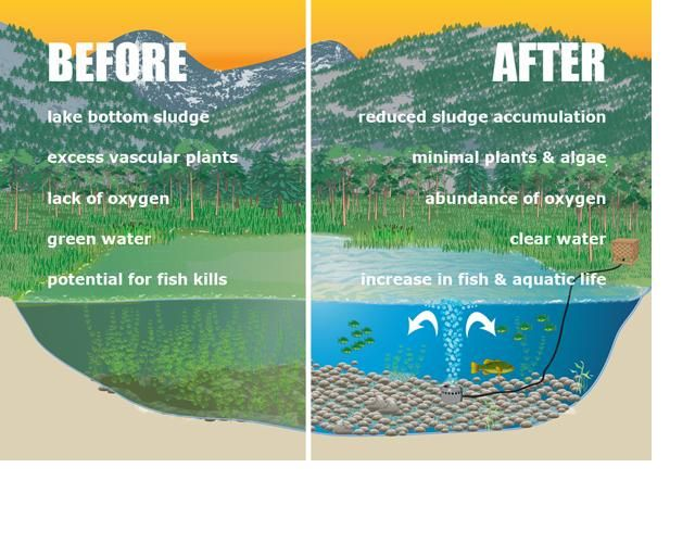Natural Swimming Pool Diagram Diy Swimming Pool Bonding Diagram Elsavadorla