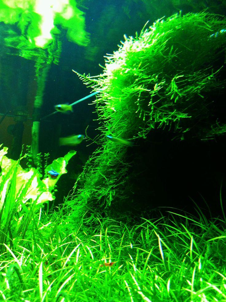 Underwater plants.
