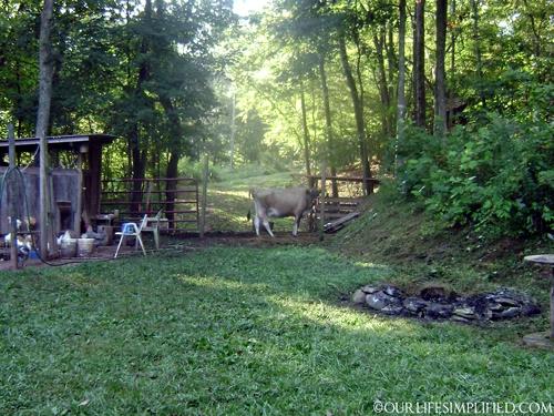 Backyard Farming Animals : backyard farm