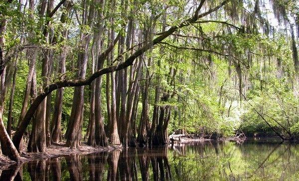 Congaree National Park, in Richland County, South Carolina
