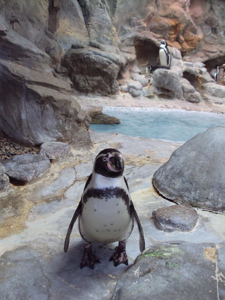 Niagara Falls Aquarium Travel Places We Have Been