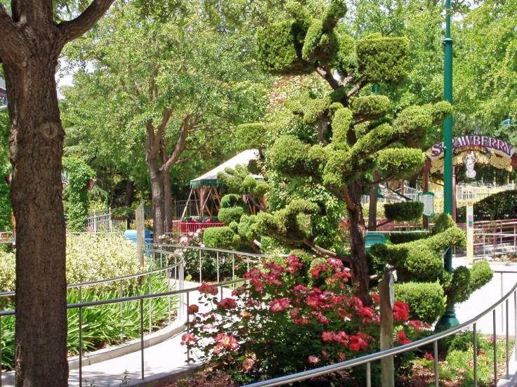 2007 05 25 Bonfante Gardens Trees Pinterest