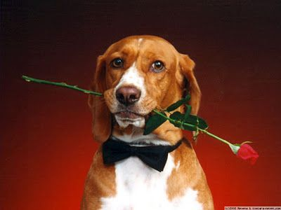 valentine's day movie dog