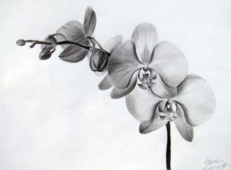 Orchid by Zeroxy92 | drawing lessons | Pinterest: https://pinterest.com/pin/199073246002810625