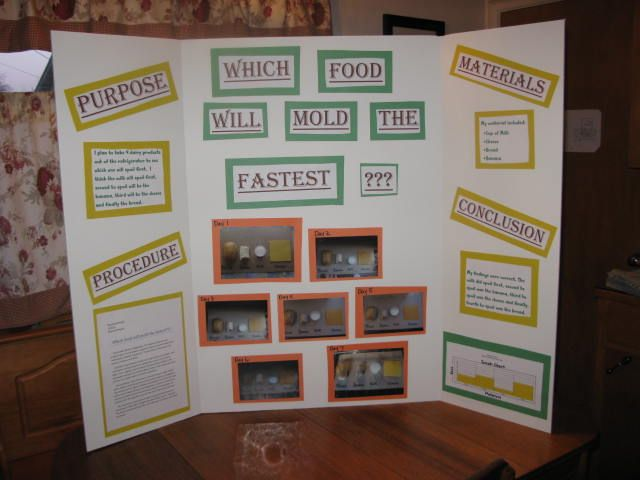 bread mold science fair project Hi lil jo, you should check out the science fair project guide on the science buddies website this guide will help you plan your experiment you also need to learn as much as possible about bread mold.
