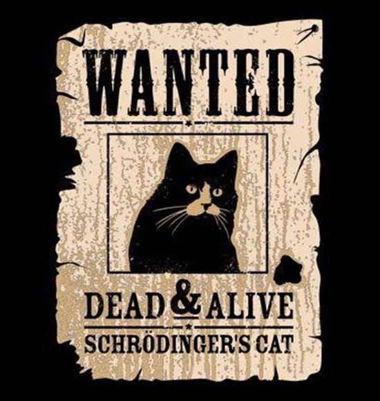schrodinger's cat | all about cats | Pinterest