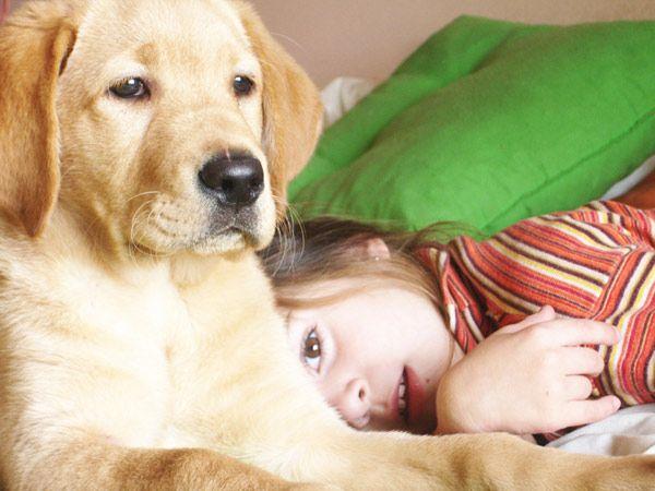 Best dog breeds for kids dogs we want pinterest - Best dog breeds kids ...