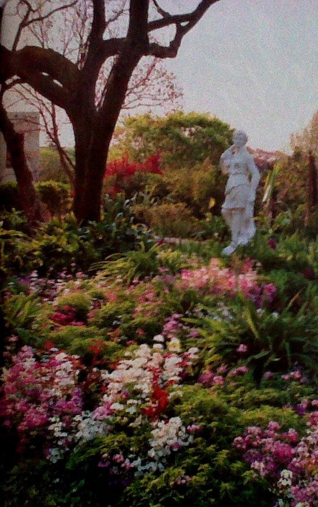 Kim: Gardening ideas on pinterest Details