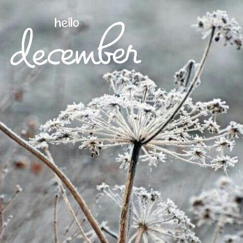 December - the world turns from gold and orange to silver and white