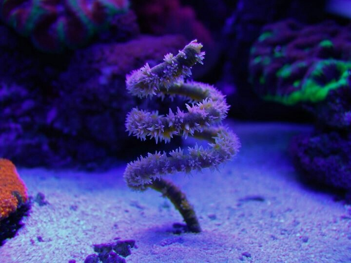 cool saltwater fish