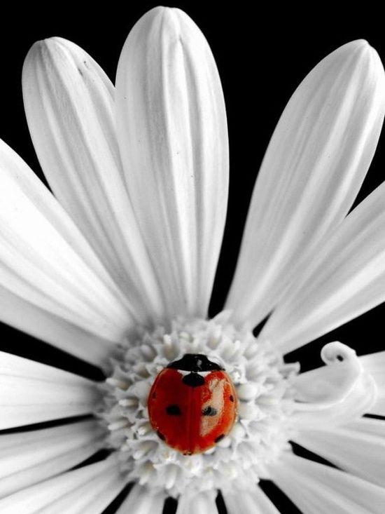 Lady bug <3