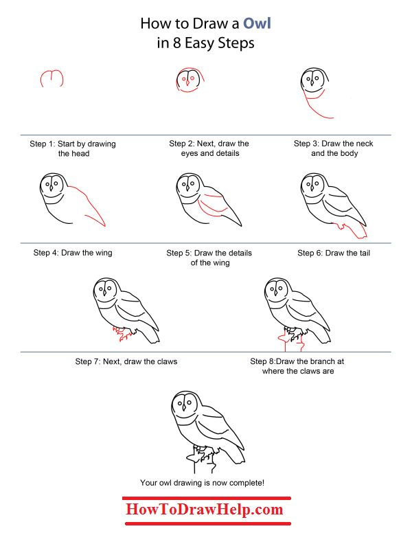 How to draw a owl step by step tutorial all things owl for Step by step drawing an owl