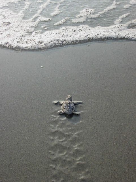 baby turtle making beautiful patterns, but unaware (just for human pleasure)