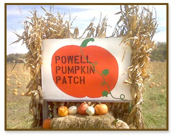 Pumpkin Patch is the shopping destination for the well dressed child; a top kidswear fashion label that helps to keep your child looking their smartest best.
