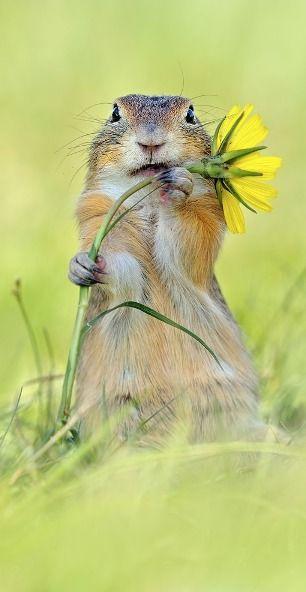 cutie....