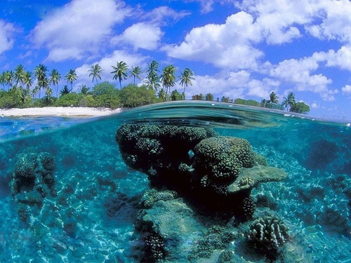 Coral Reef, French Polynesia