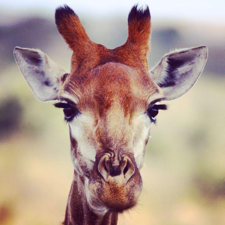 Hello pretty! #... Eyelashes