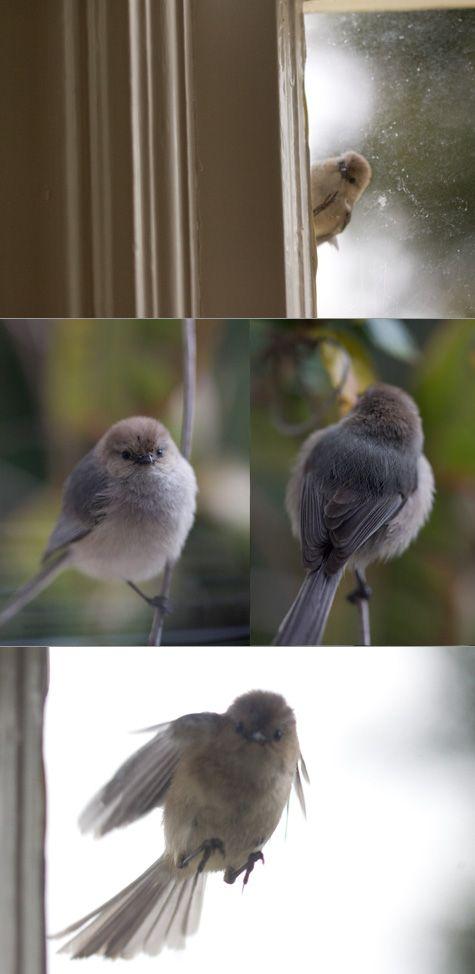 funny bird bird watching pinterest