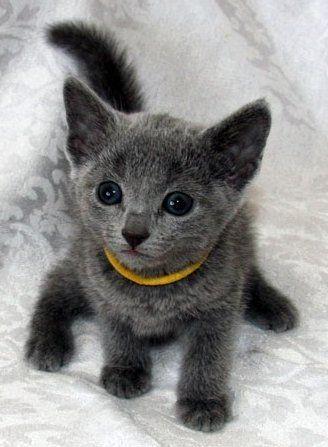 Grey cuteness!