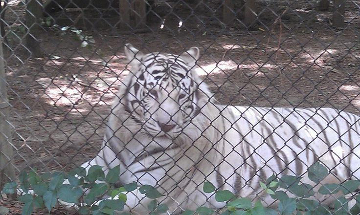 ... exotic animals and advocate for proper treatment (not as pets or