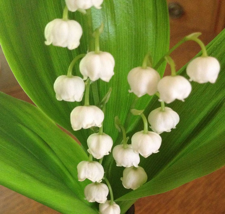 proflowers lily of the valley