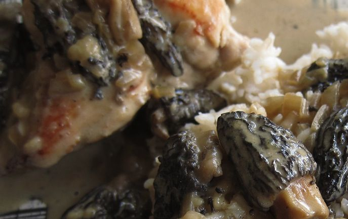 French Recipe for Morels: Chicken with Morels » Chez Bonne Femme