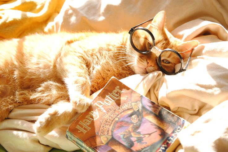 harry potter fan - cat