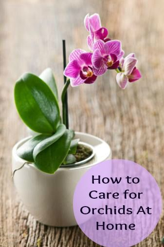 How to care for orchids at home bonsai other potted plants pinterest - How to care for potted orchids ...
