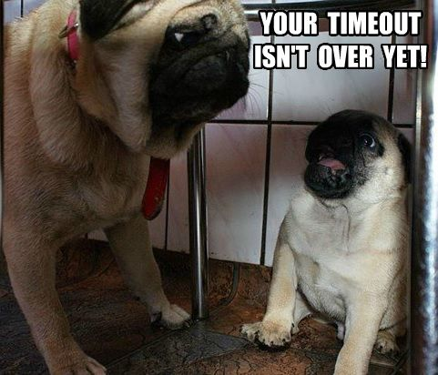 Pug Time Out