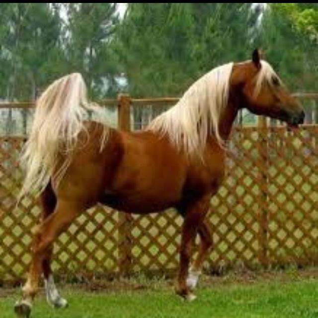 stunning like a fairy tale! | Horses | Pinterest