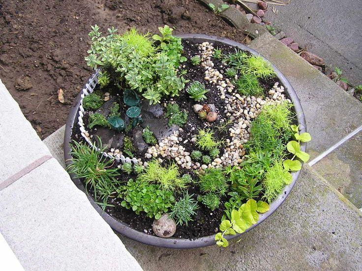 Plants for miniature gardens fairy garden pinterest Fairy garden plants