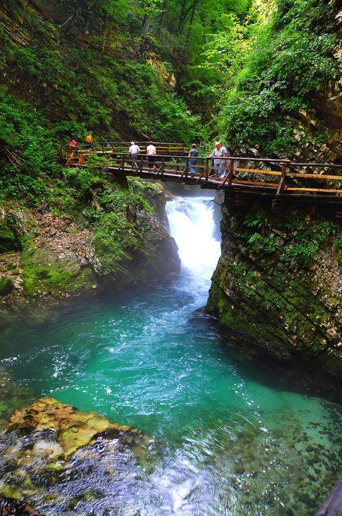 Nature Bridge   Amazing Pictures!   Pinterest