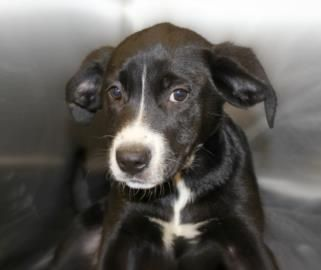 Big dog ranch rescue by phone 561 791 6465 or 561 309 3311 by