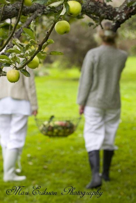 Gathering....apple picking