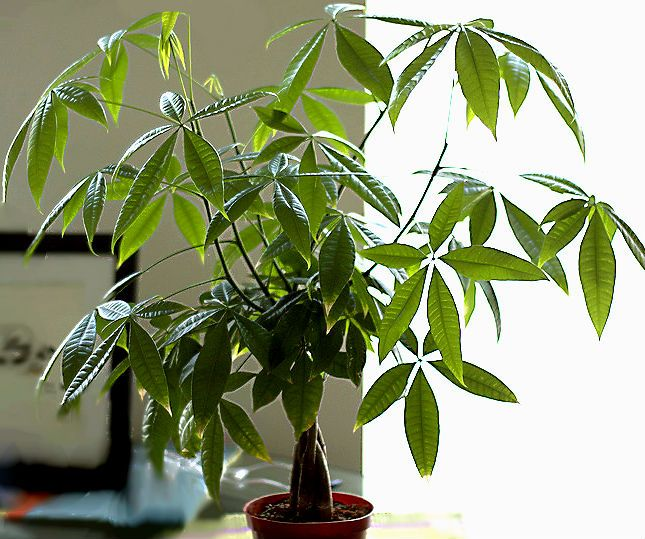 Best low maintenance indoor plants a try my green for Low maintenance indoor trees