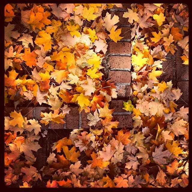 Leaves cover the bricks on the #UofSC Horseshoe. Photo by erroltisdale: http://instagram.com/p/g3XmhtKYEE/