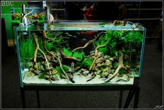 Layout by Kirua. #aquascaping Aquariums, vivariums, Paludariums, Te ...