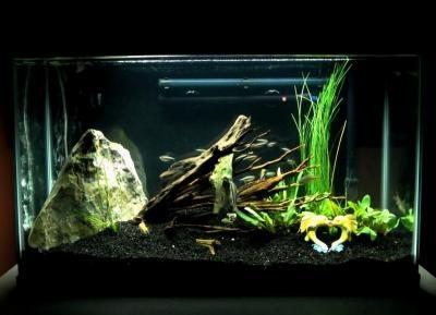 caribsea eco complete black planted aquarium substrate