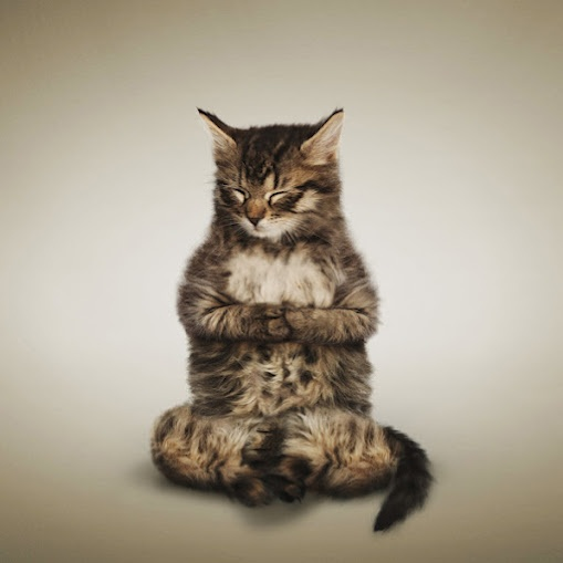 Cute Cats doing Yoga! - Via thenewspatroller.com