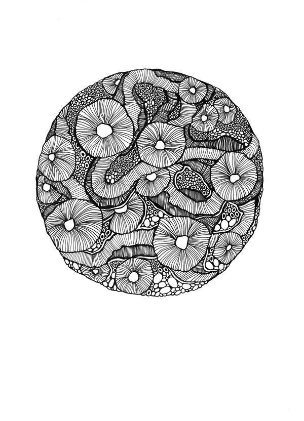 Botanica 2011 Maggie Sichter #illustration #flora