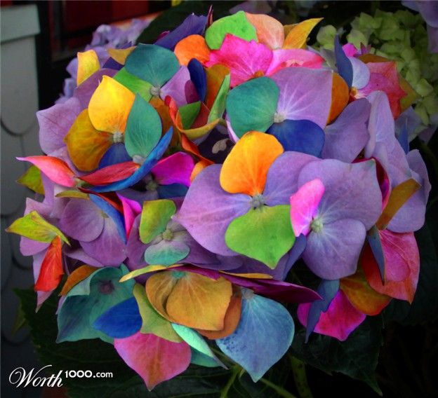 multi colored flowers colored pinterest