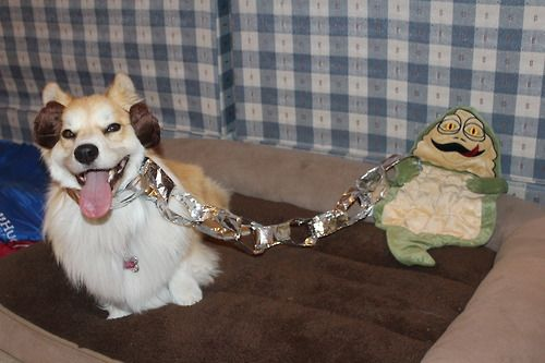 slave leia and jabba the hutt... - (star wars)(dog ... Jabba The Hutt Costume For Dogs