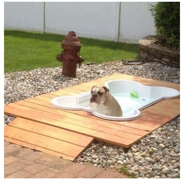 coolest backyard for a dog just cool pinterest