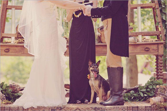 #wedding dog