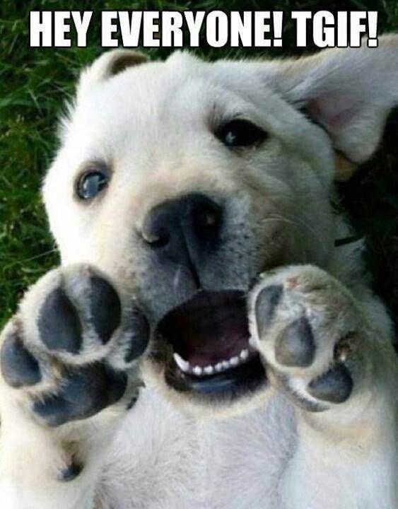 tgif funny animals - photo #30