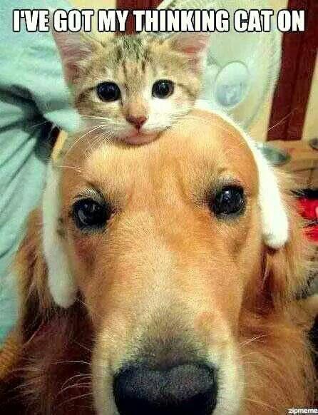 I've got my thinking cat on :-)