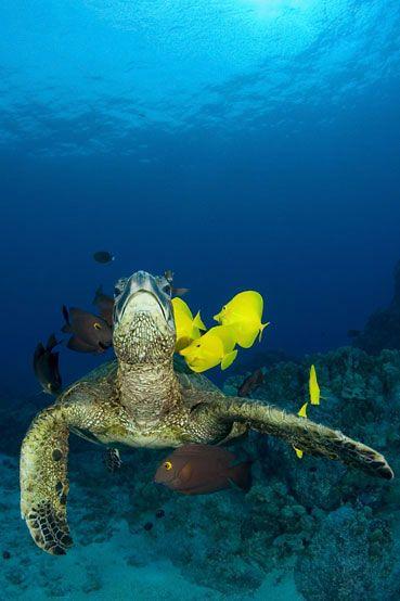 Fish tank full of exotic fish/turtles
