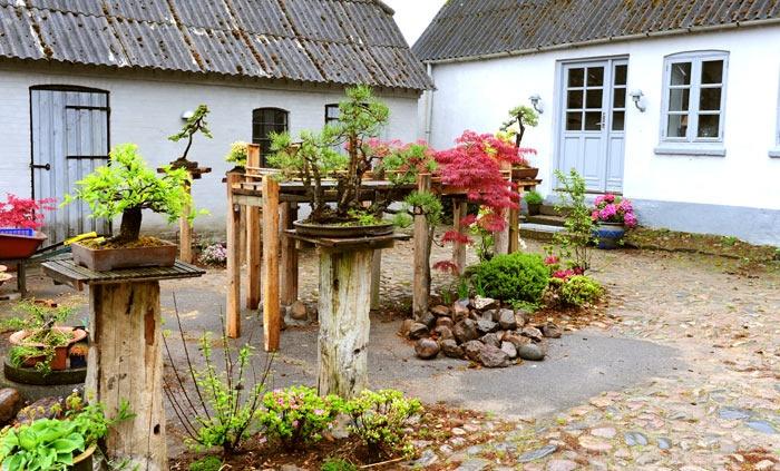 Backyard Bonsai Garden : Bonsai atelier  garden Inspirations  Pinterest